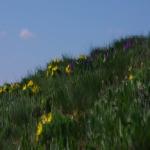 Svahy přírodní chráněné oblasti Větrníky 10.4.2020