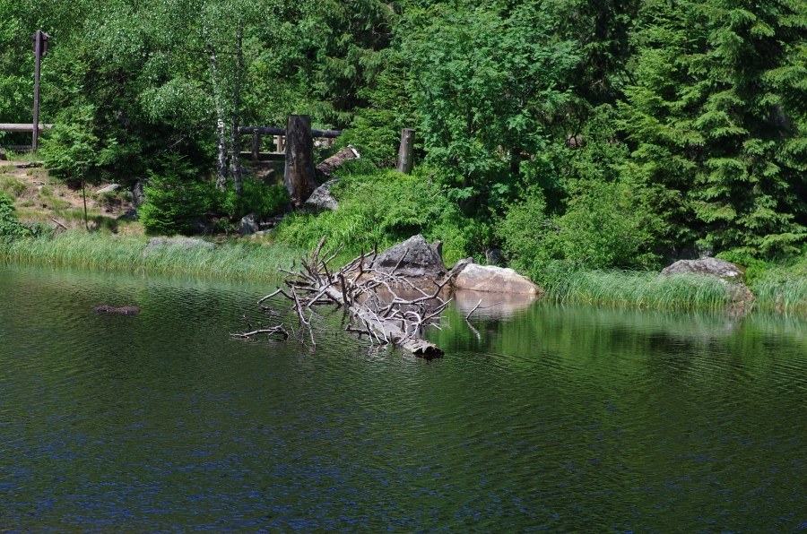 jezero Laka Šumava 190702 6833